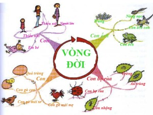 vong-doi
